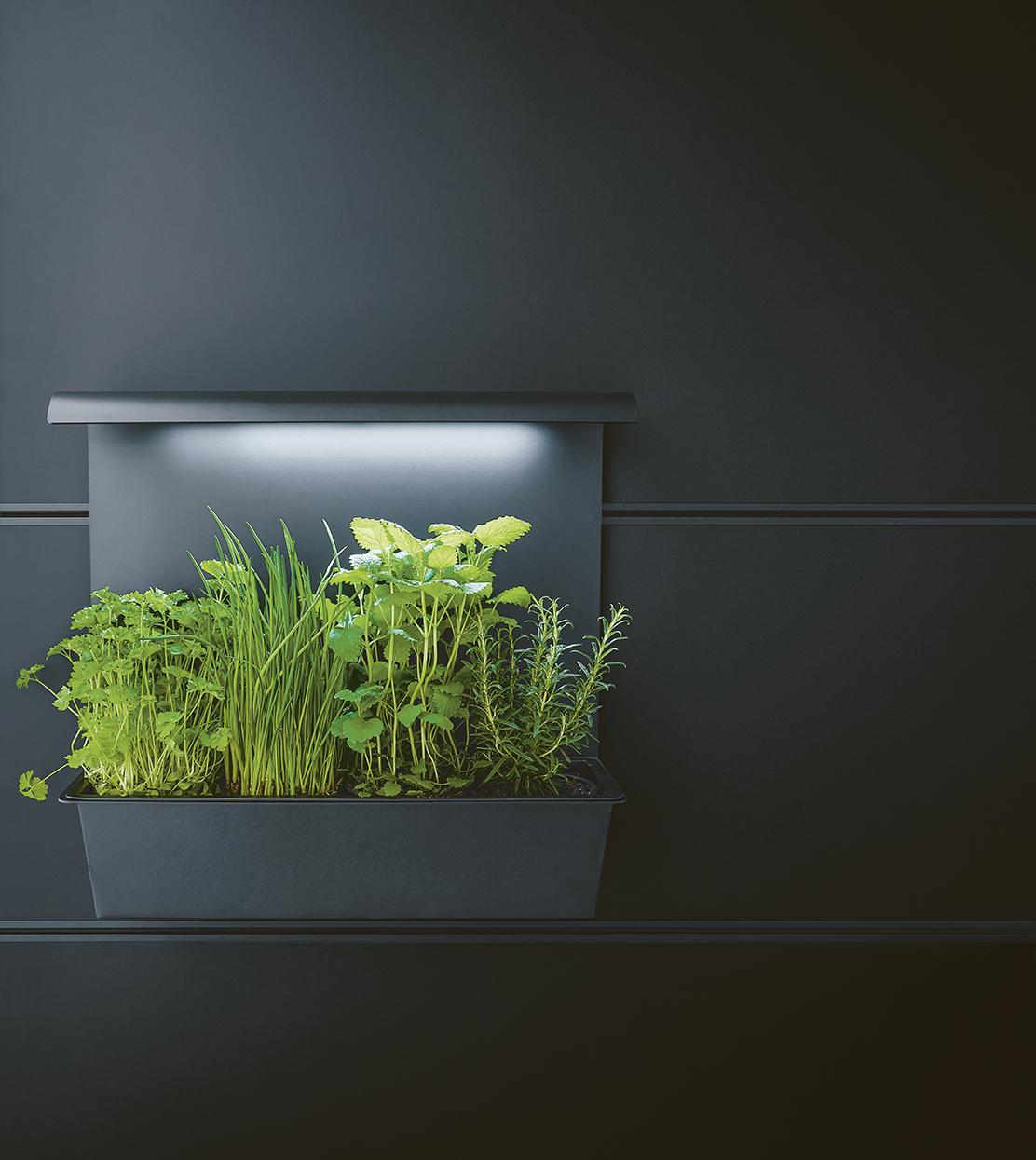 Décoration plante pour cuisine moderne épurée annecy Next125